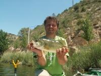 Okoun pstruhový Ebro 2006