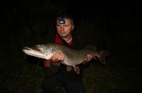 Štika z řeky Moravy listopad