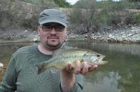 Vyvláčený okounek pstruhový duben Ebro 2010