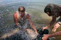 prchající kapři Ebro duben 2010